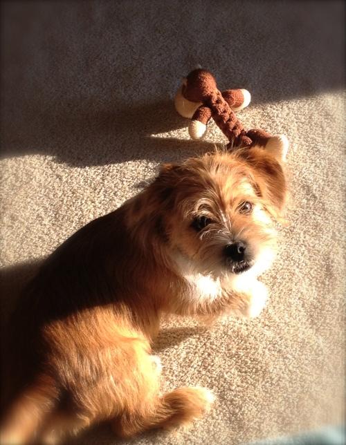 Ziggy in the sun